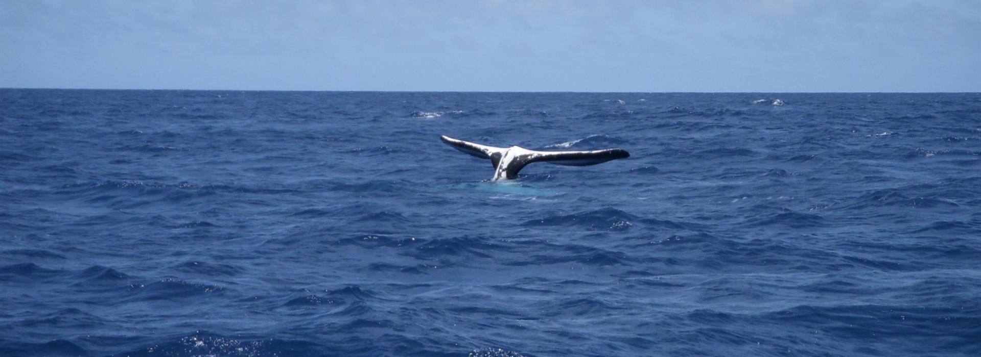 Whale at Bird Island, Seychelles