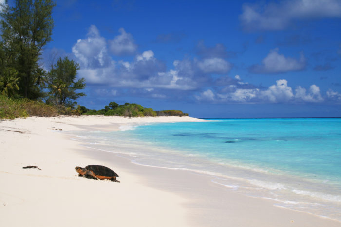 Tracking and monitoring of a sea turtle at Bird Island Seychelles